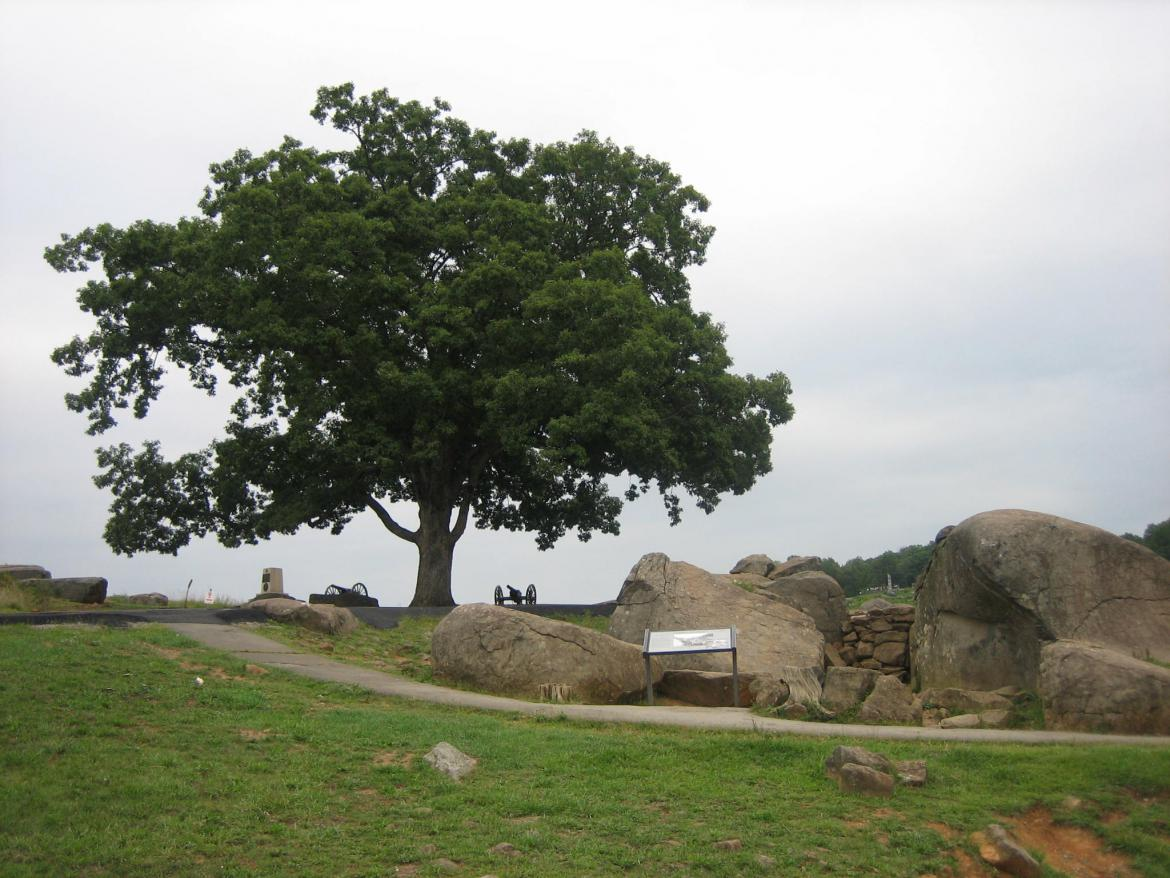 Witness tree on Devil's Den