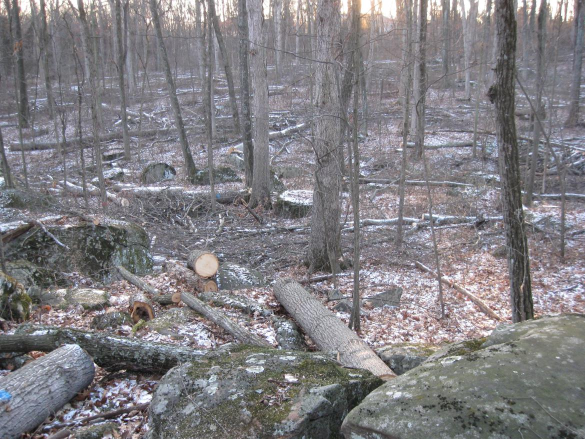 Downed witness trees