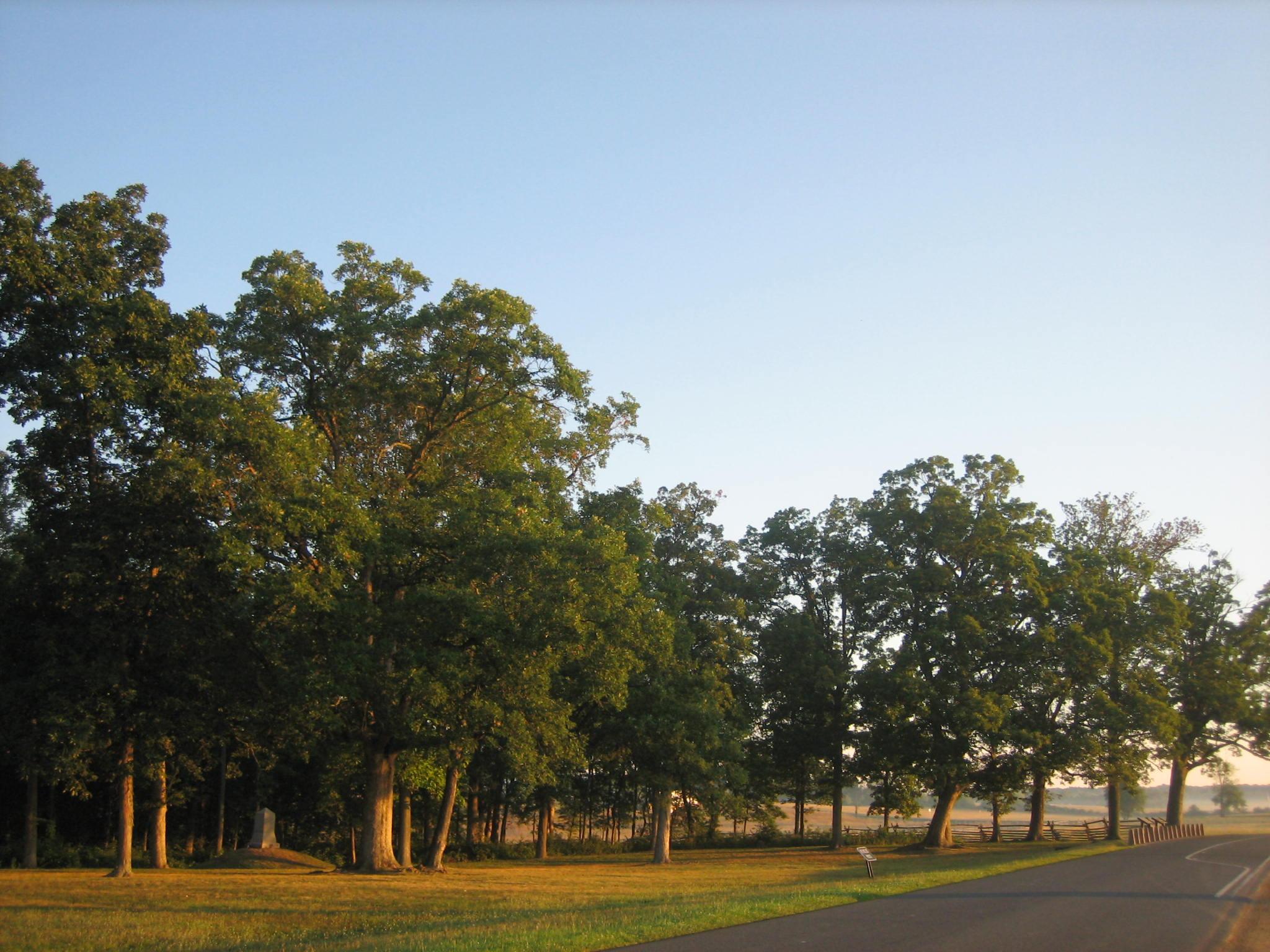 Gettysburg Witness Trees In McPherson's Woods/Reynolds