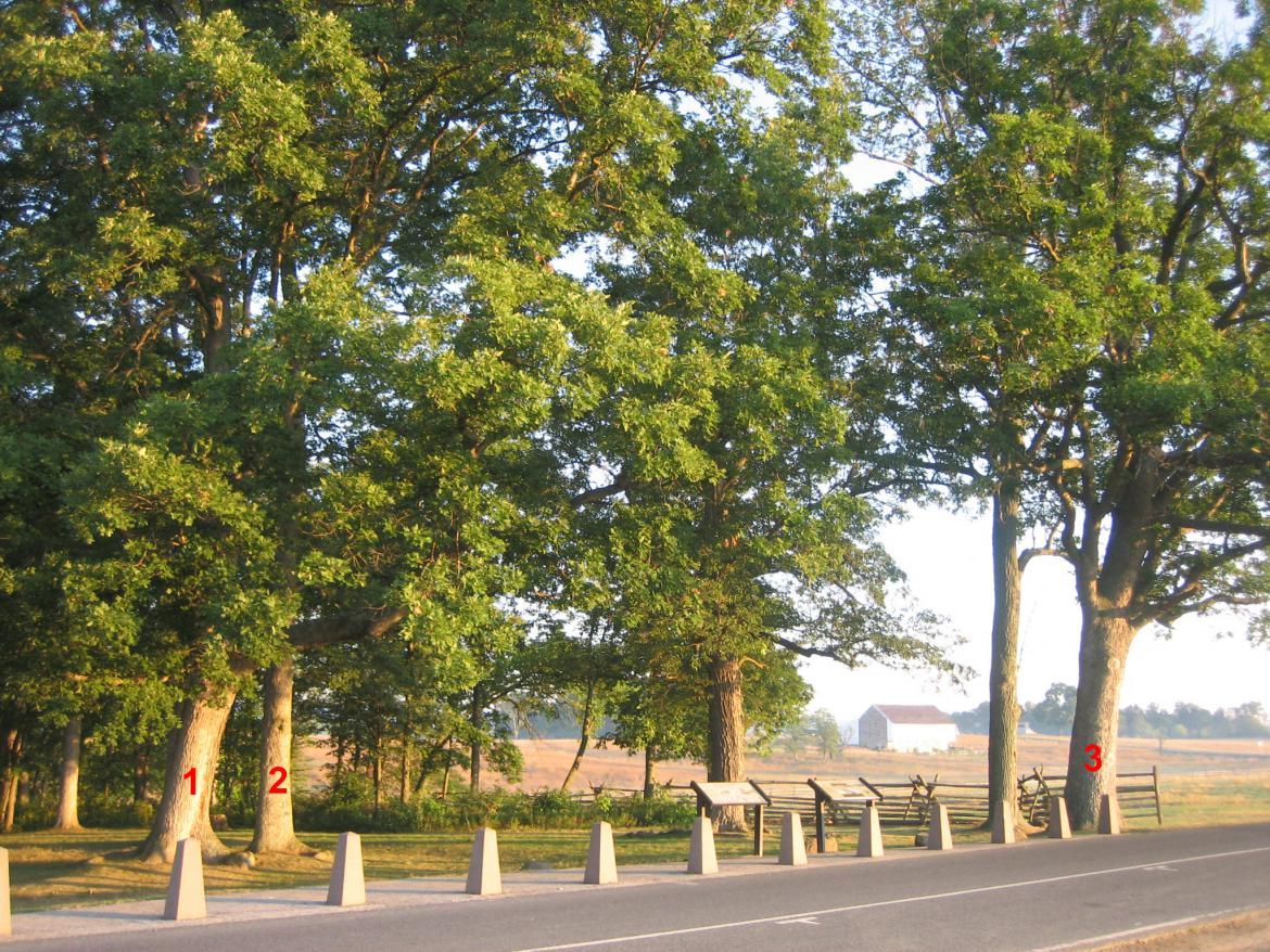 Three labeled Gettysburg witness trees