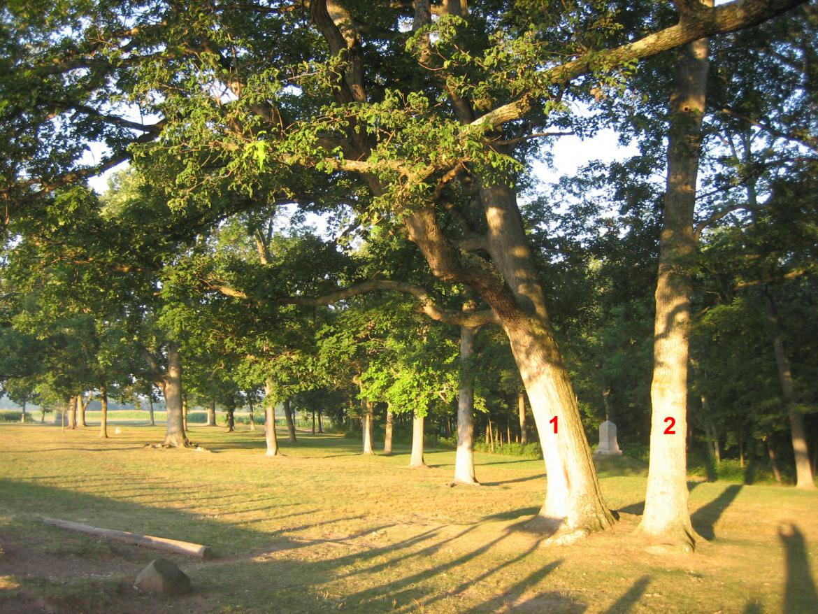 Two witness trees next to Reynolds' Marker