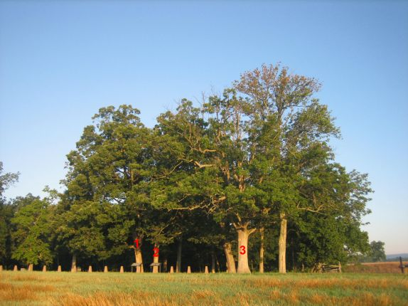 All three witness trees