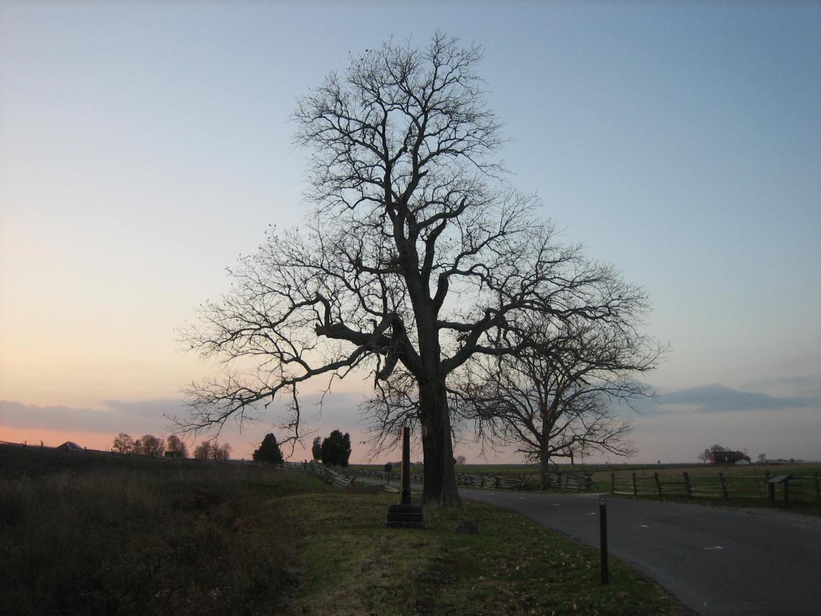 West view of the witness tree
