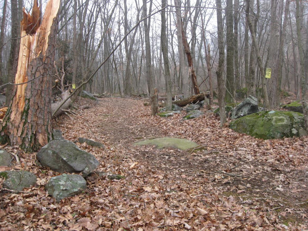Natural markers on the trail
