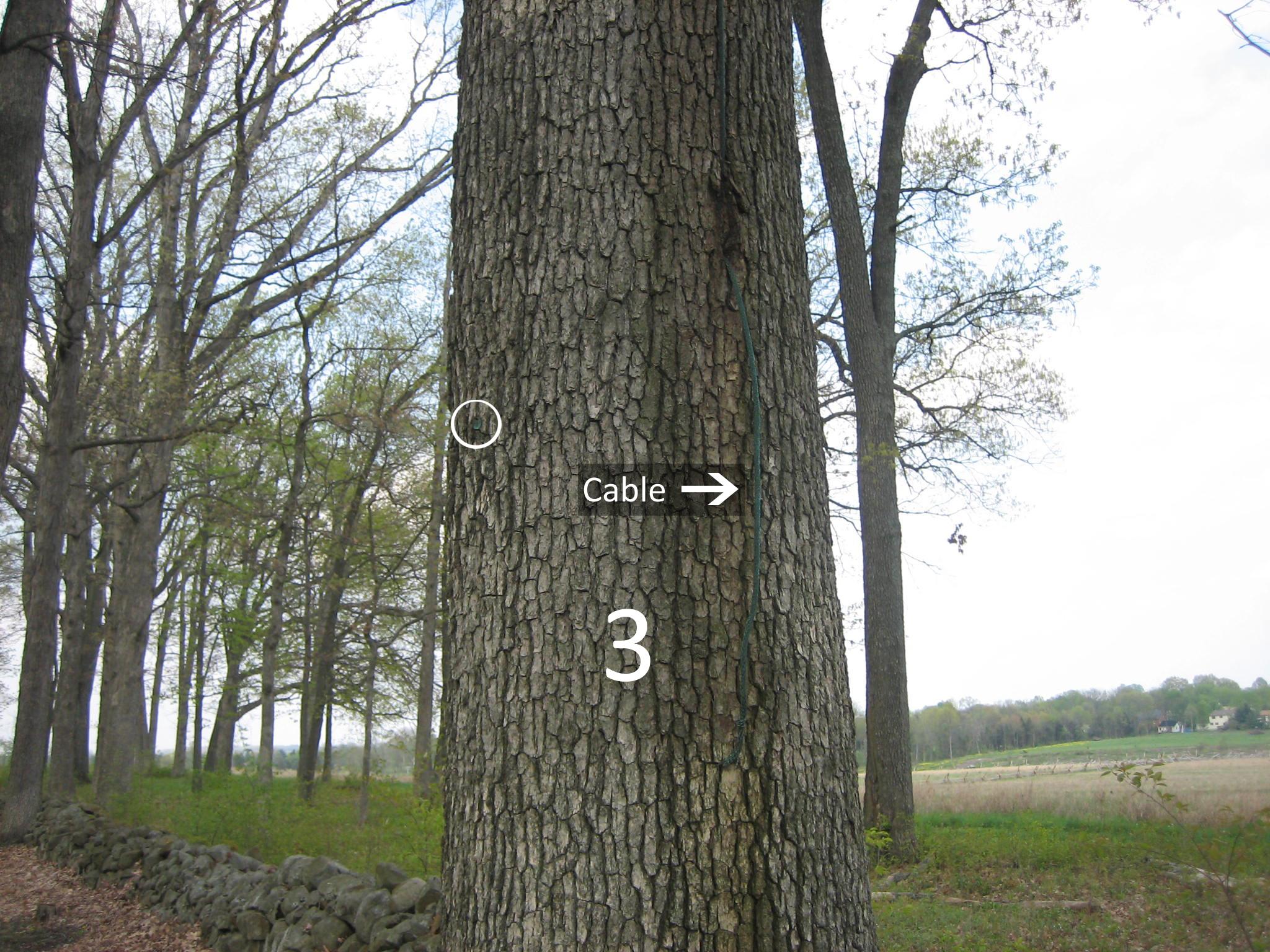 Gettysburg Witness Trees