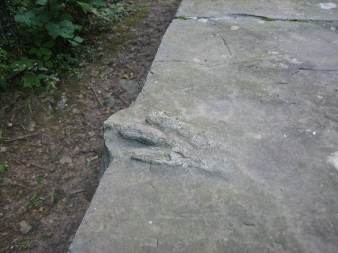Anchisauripus Sillimani footprints