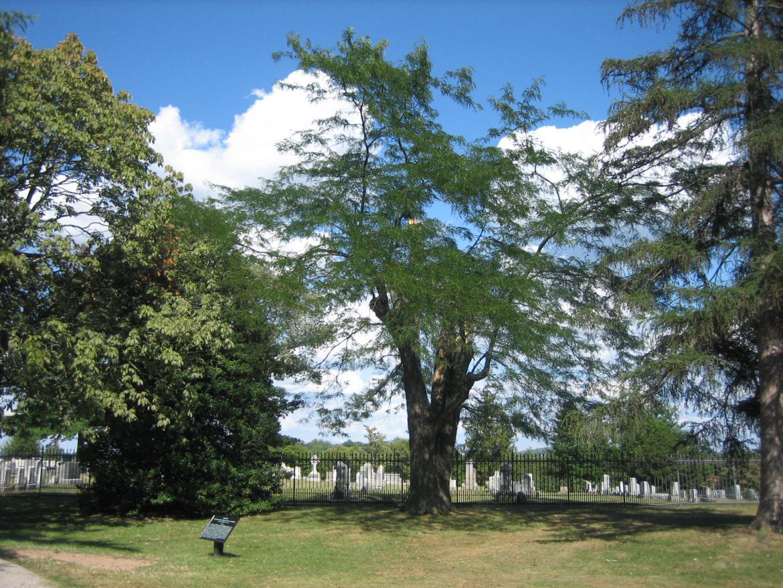 Gettysburg Witness Tree Damage Update Sickles Quot Witness