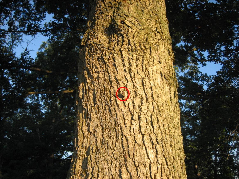 Tag on witness tree