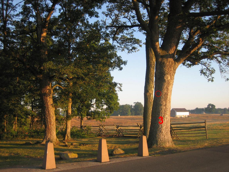 Tag on witness tree number 3