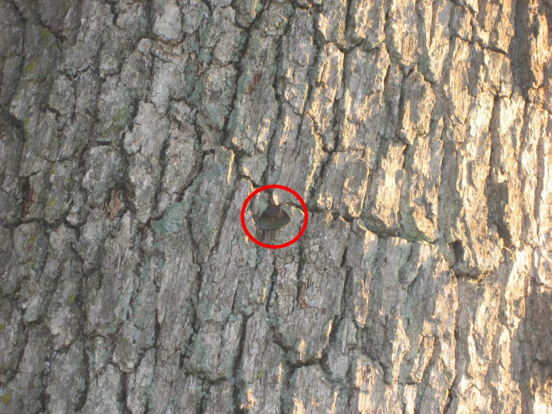 Bent tag on witness tree
