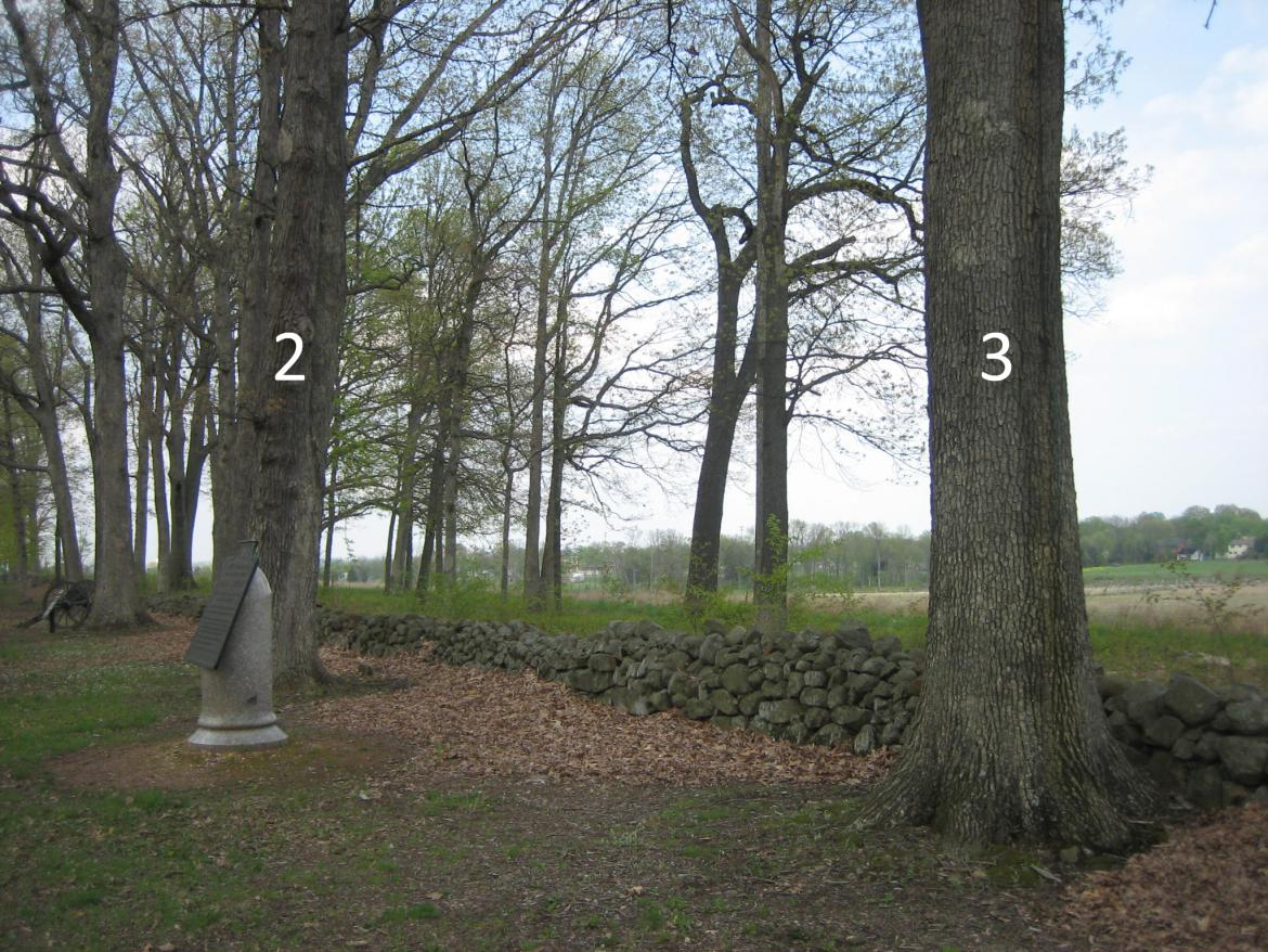 Southwest view of trees #2 and #3