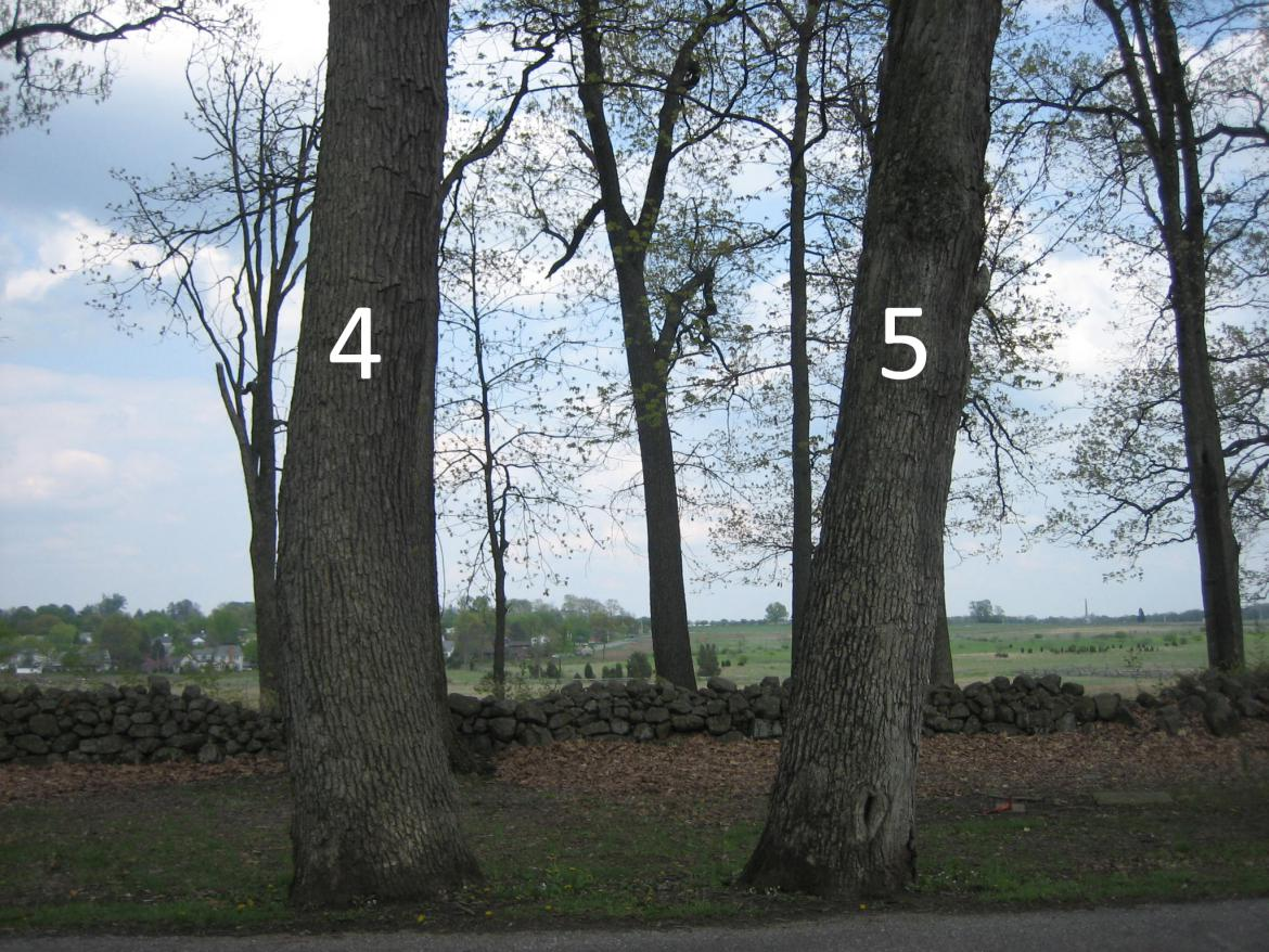 Witness trees #4 and #5
